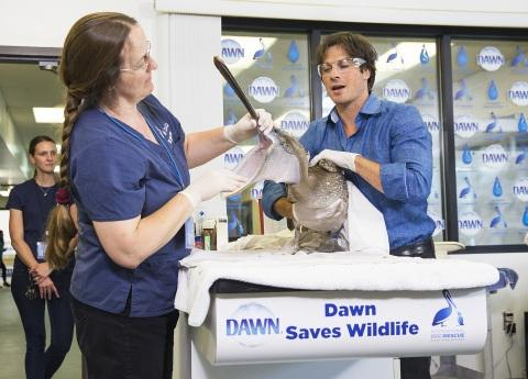 Dawn Unveils New Wildlife Video Series